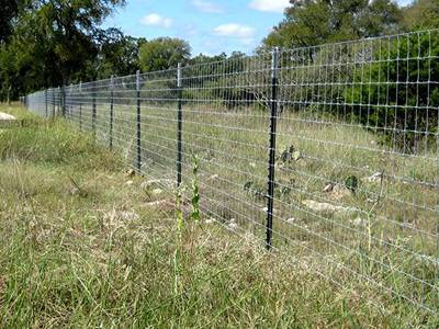 farm fencing secured by green PVC coated studded T posts