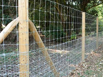 A hexagonal wire mesh and field fencing with wooden posts protects the trees and there are so many fallen leaves on the ground.